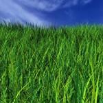 grass-art