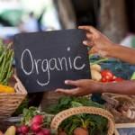 organicveggies_blog