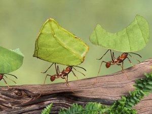 ants_blog