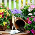 Flower-Gardening-Tips