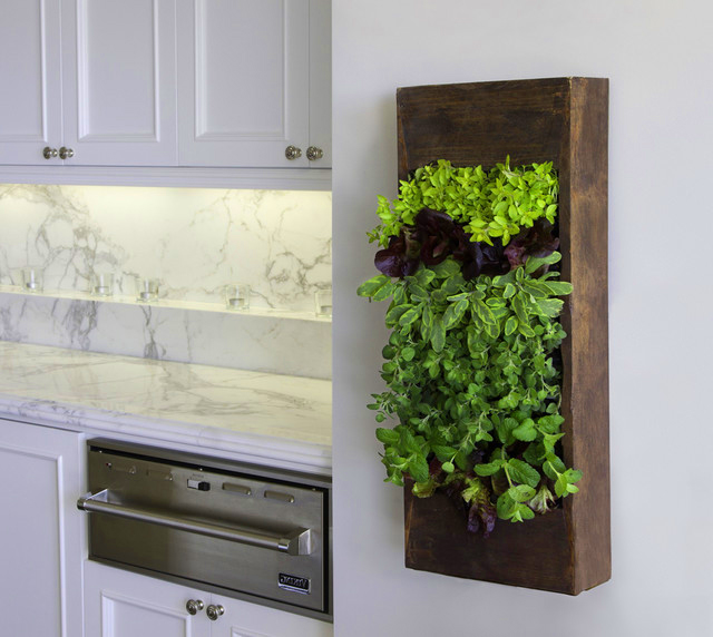 Vertical gardens living walls living art oh my who Indoor living wall herb garden