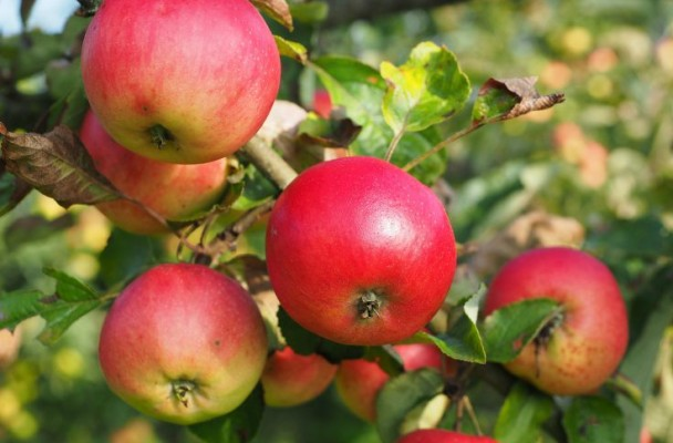 easy-apple-recipes-for-fall
